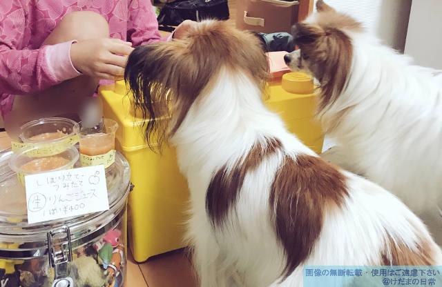 犬と子供が仲良し♪りんごジュース屋さんに並んでみた。
