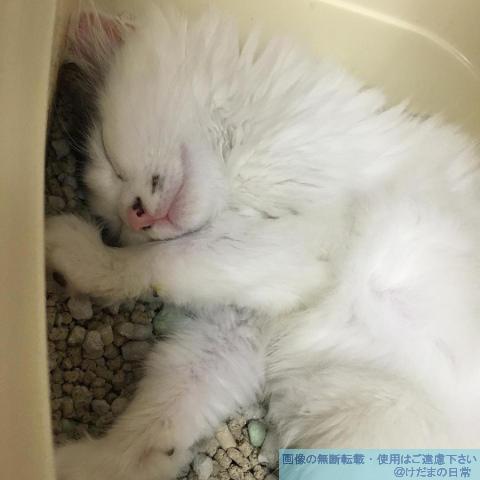 猫の便秘が苦しそう…あぁかわいそう【闘病記】