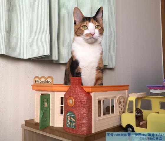猫の居場所。なぜそこにテツ子…。