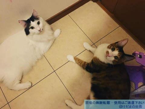 オス猫の性格はおっとりしてて可愛い【とらじLOVE】