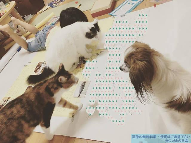 ペットと自由研究と小学生【まとめ作業】