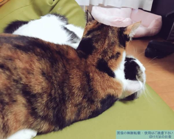 猫が2匹で仲良し♪と思ったら…