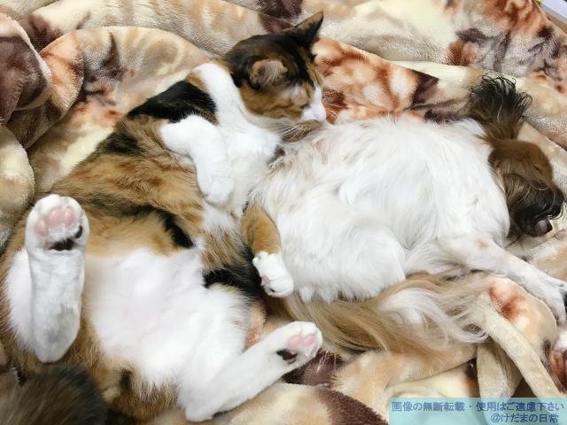犬と猫を一緒に飼う。ストレスを与えずに同居を開始する【幸せな世界】