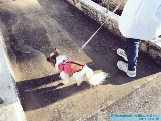 バリアフリーのありがたさを老犬の散歩で実感した話。
